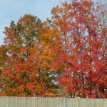 Red Trees02